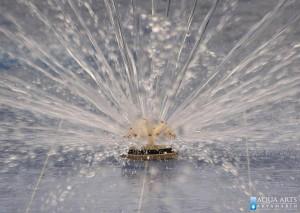 4.Fontana - mlaznica u privatnom otvorenom bazenu u Smederevu